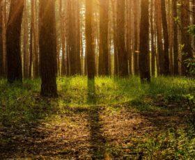 bosques encantados españa
