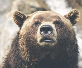 osos y lobos por las calles confinamiento