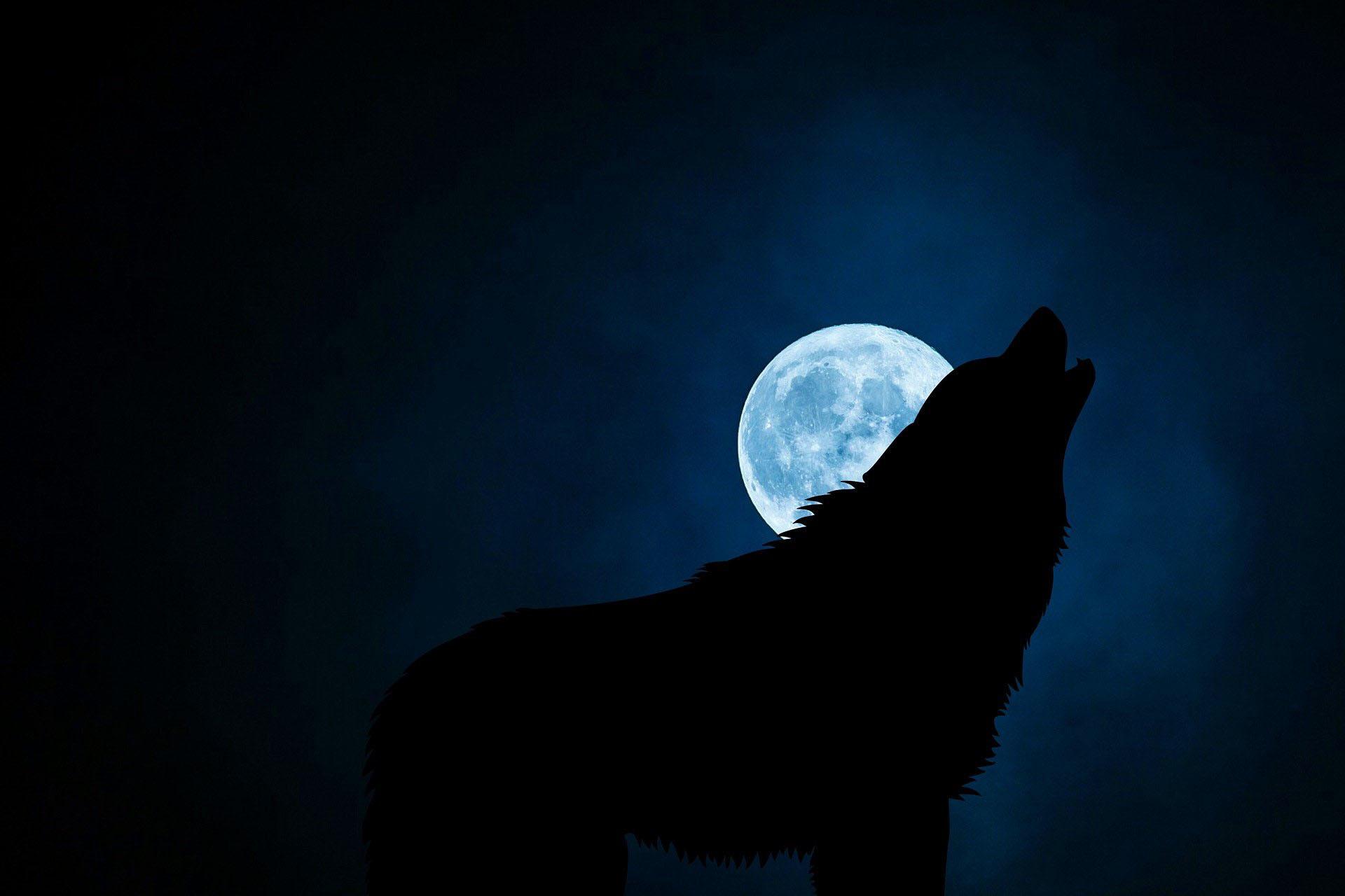 lobo ibérico celta