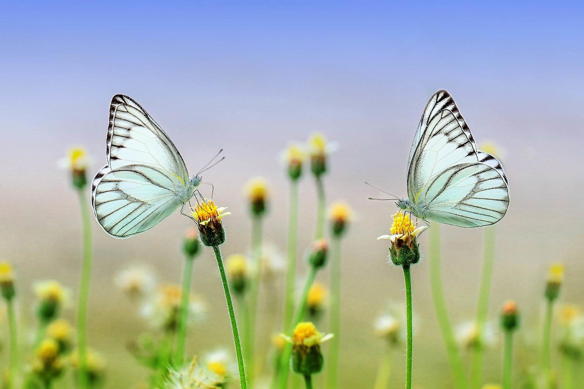 mariposas significado